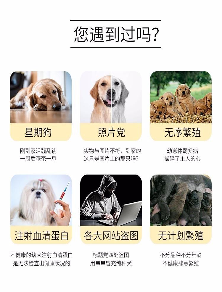 实体店出售精品泰迪犬保健康包养活送用品8