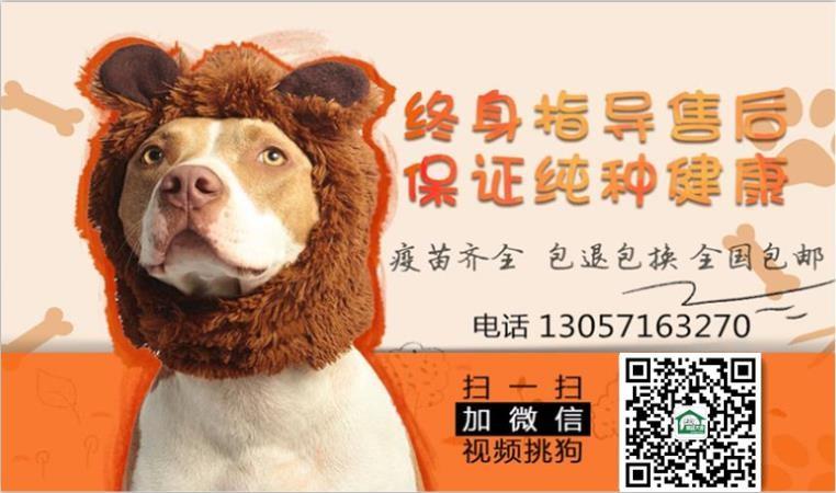 实体店出售精品泰迪犬保健康包养活送用品5