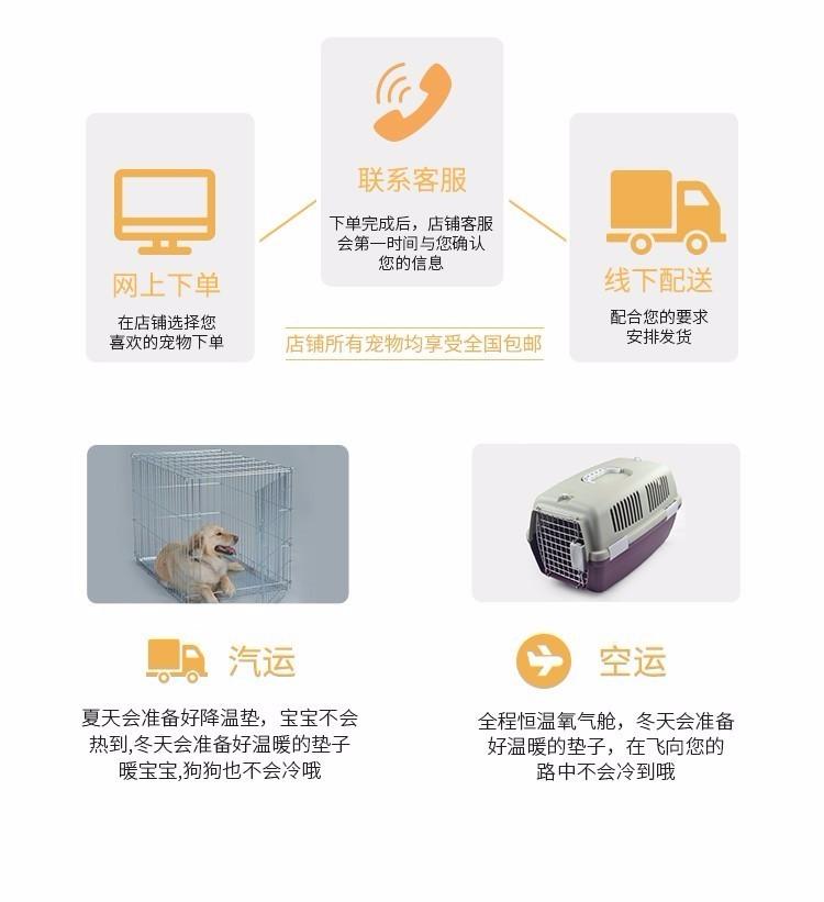 实体店出售精品泰迪犬保健康包养活送用品11