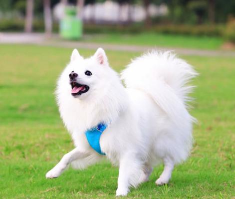 极品、聪明可爱的银狐在这里、优惠纯种和健康CKU认证