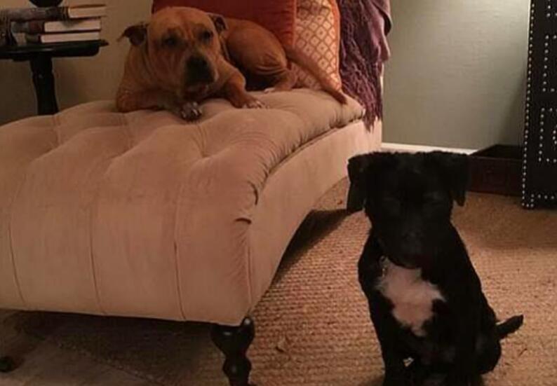 两只比特犬被人遗弃,只剩下两个彼此照顾