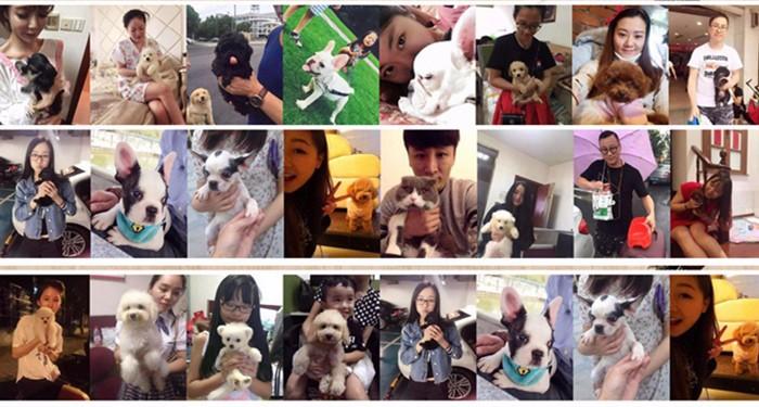 杭州家养精品茶杯犬玩具泰迪犬贵宾狗宠物狗包健康13