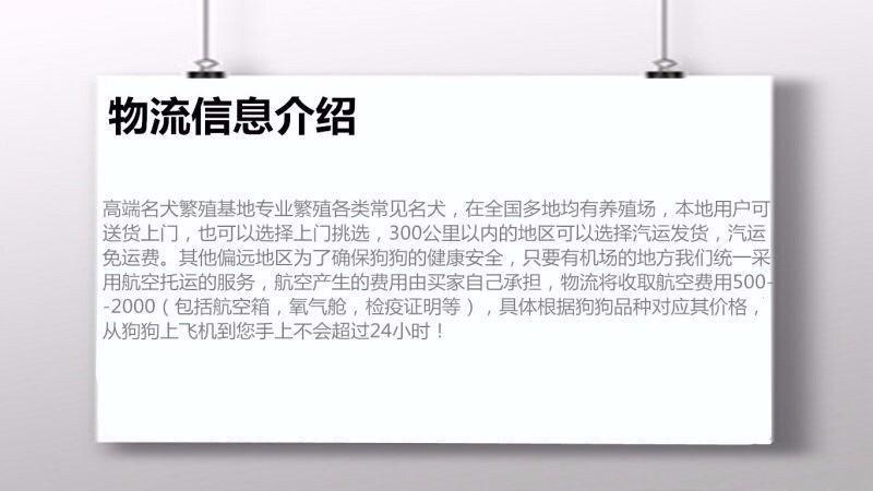 桂林名牌基地直销泰迪幼犬 建议大家上门看狗选购爱犬11