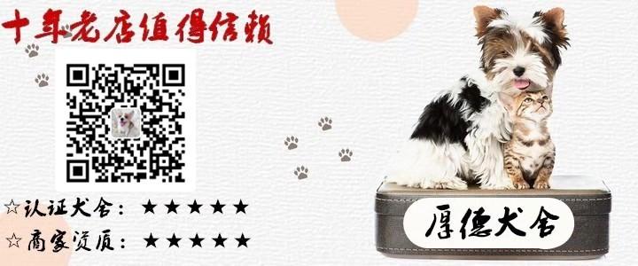武汉精品高品质斑点狗幼犬热卖中真实照片包纯5
