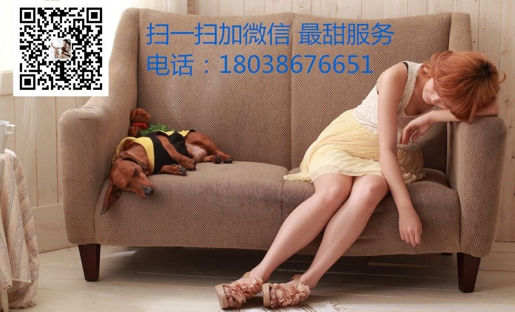 抚顺大型犬舍低价热卖极品泰迪犬最优秀的售后5
