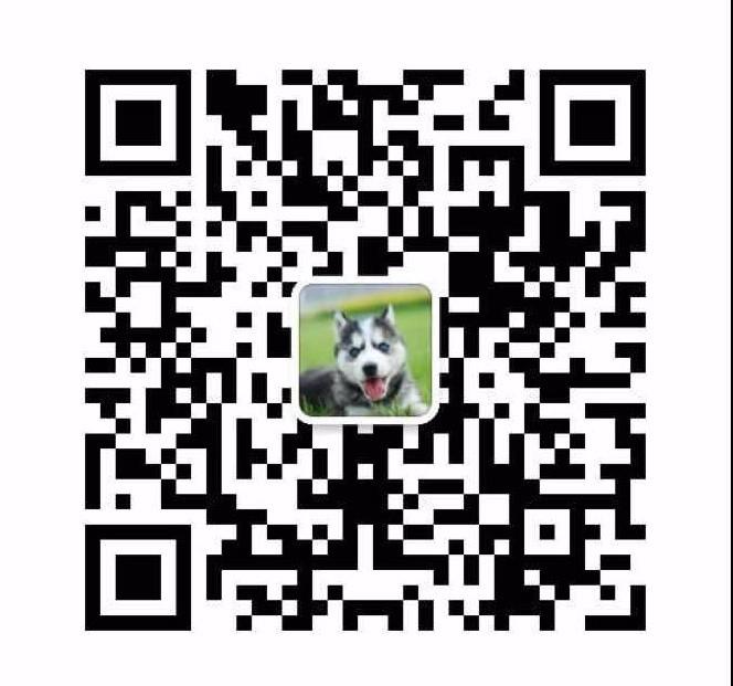 高品质昆明犬宝宝、专业繁殖包质量、三年质保协议16