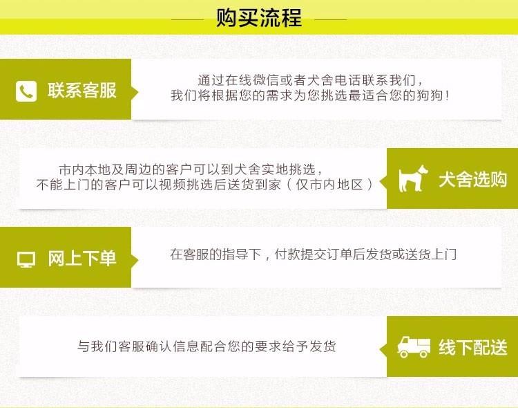 高品质昆明犬宝宝、专业繁殖包质量、三年质保协议9