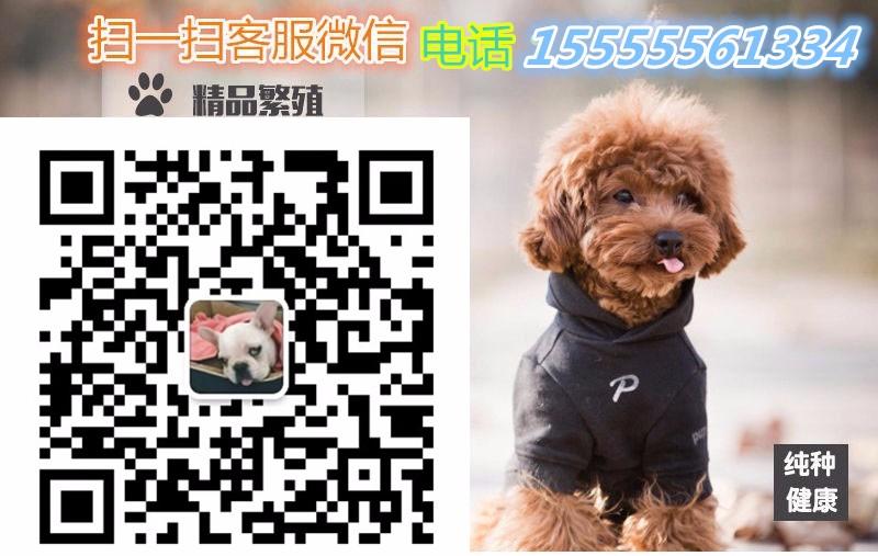 小短腿京巴犬幼犬北京狗北京犬白色大眼睛公母都有多只5