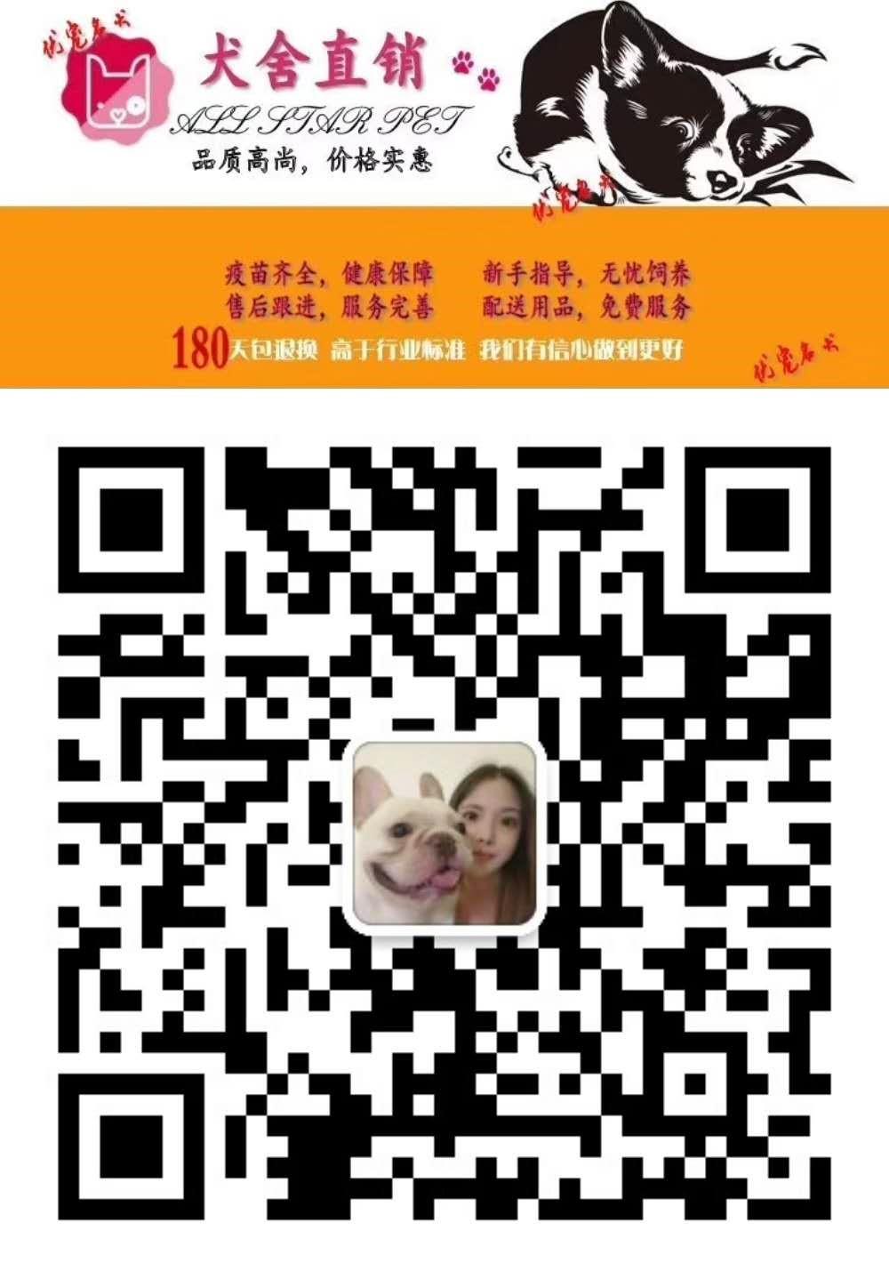 佳木斯售纯种家养茶杯犬 可爱泰迪公狗宝宝疫苗已做5