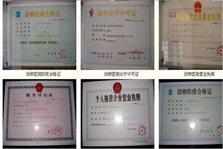 诚信交易广州自家纯种泰迪犬健康终身保障签协议送用品6