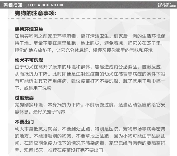 青岛狗场出售韩系血统泰迪犬 已做好进口疫苗和驱虫13