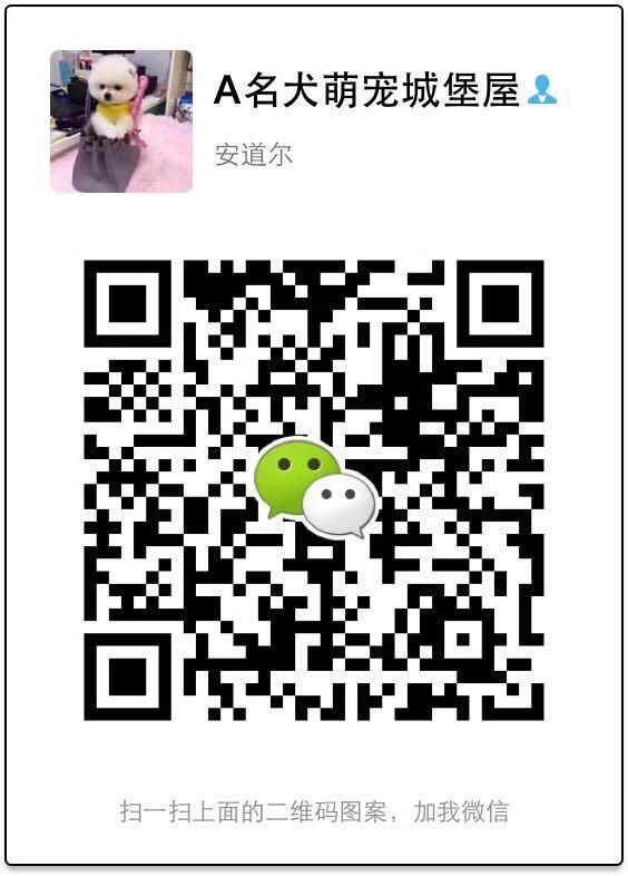 武汉实体店热卖杜宾犬颜色齐全看父母照片喜欢加微信5