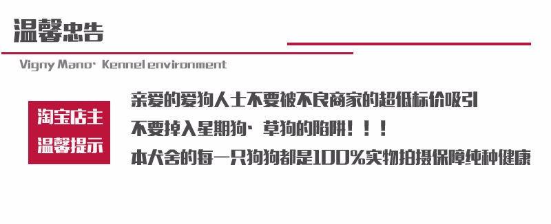 韩国引进萌系佛山泰迪犬出售 随时电话咨询服务24小时10