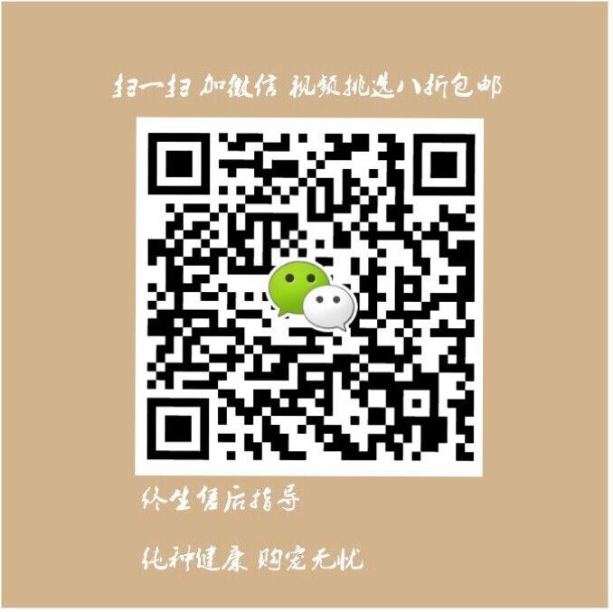 低价转让韩系血统武汉泰迪犬 可视频看狗可包邮5