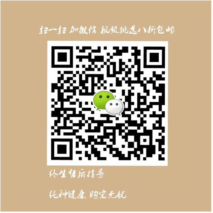 低价转让韩系血统武汉泰迪犬 可视频看狗可包邮12