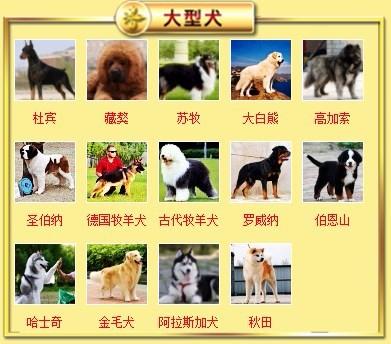 广东出售颜色齐全身体健康泰迪犬签订终身纯种健康协议8