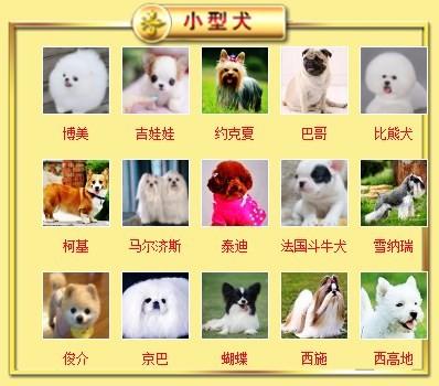 广东出售颜色齐全身体健康泰迪犬签订终身纯种健康协议6