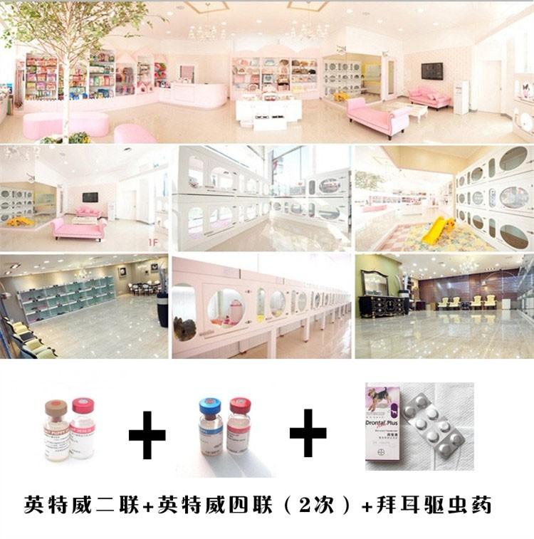 青岛犬舍出售精品纯种健康茶杯泰迪幼犬 上门可见父母7