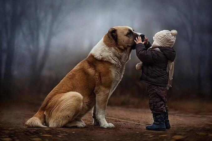 狗狗会成为孩子的美好回忆,看这些照片真实暖爆啦