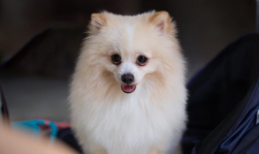 如何让爱犬更可爱呢?这样做给你意想不到的效果