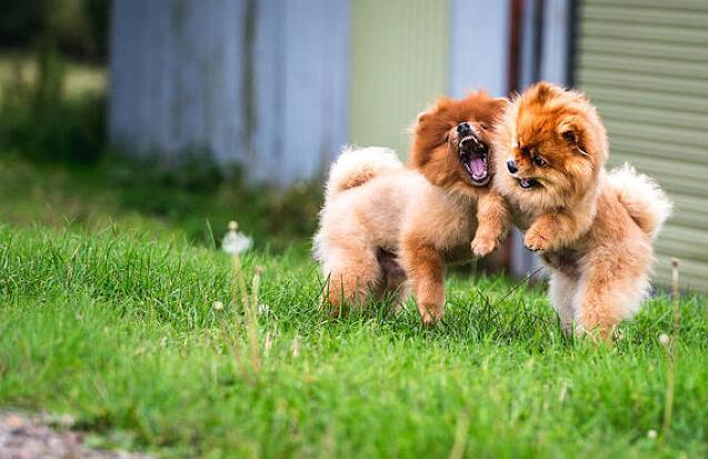 狗狗信任主人的四种表现,快对照你家狗狗有没有