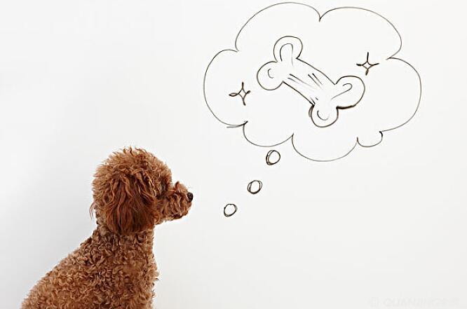 想知道您的爱犬心情如何吗?欢迎学习狗狗微表情