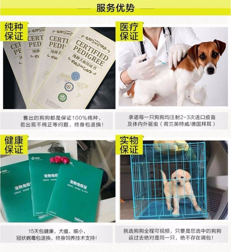 视频挑选昆明犬疫苗做齐 免费送货 包活签协议8