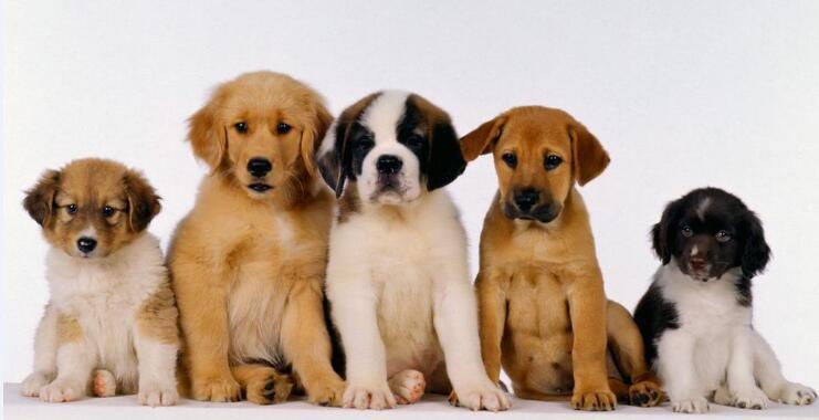上班单身狗适不适合再养一只狗