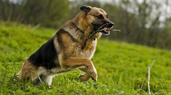 别一到夏天就把狗关屋里乘凉!记住四点,它就能出去野
