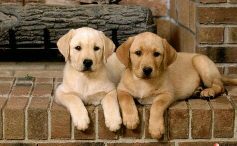 狗狗最容易被人误会的四个动作