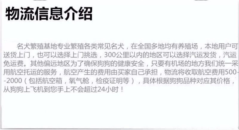 杭州家养精品茶杯犬玩具泰迪犬贵宾狗宠物狗包健康8