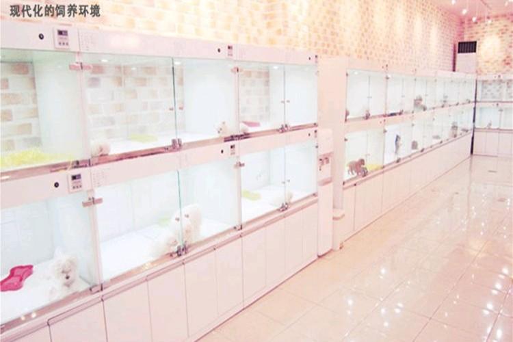 湘潭出售小体泰迪 颜色齐全健康品质泰迪熊放心喂养8