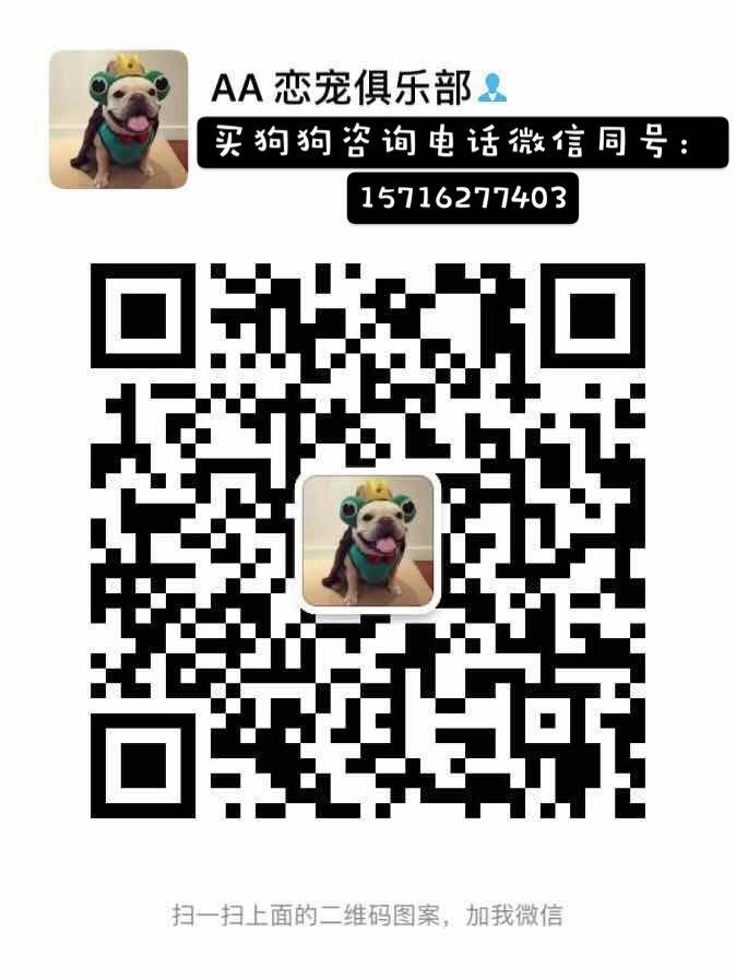 诚信交易广州自家纯种泰迪犬健康终身保障签协议送用品5