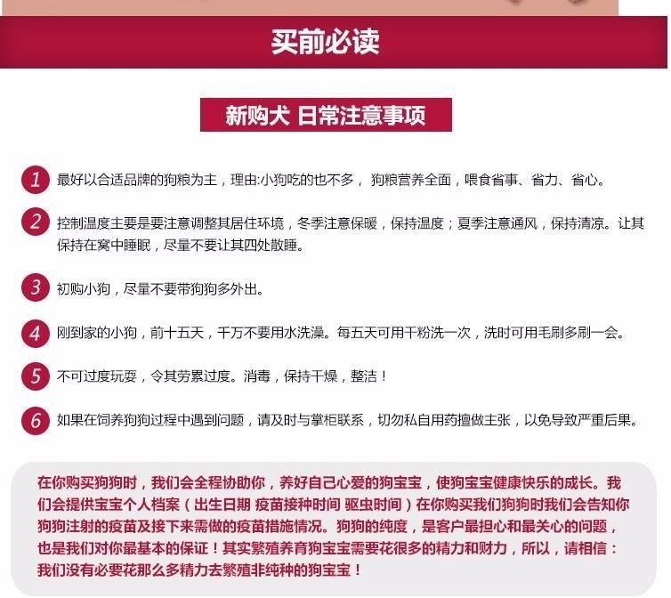 精品韩系泰迪犬长春犬舍直销 身体健康和血统有保证8