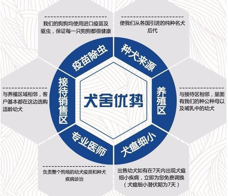 小短腿京巴犬幼犬北京狗北京犬白色大眼睛公母都有多只8
