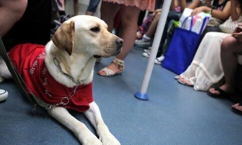 导盲犬是盲人的眼睛,路上碰见了导盲犬该如何做
