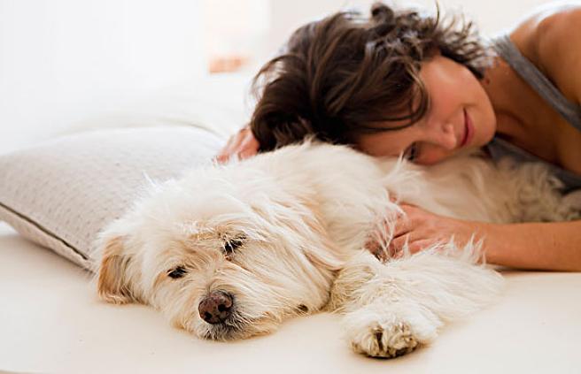 你家的爱犬究竟有多爱你?(1)