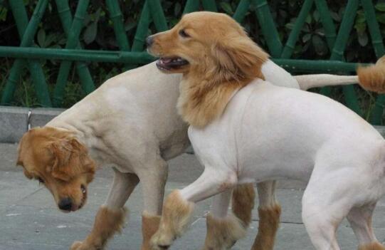 盛夏将至,如何给狗狗降温,让它冰凉一夏