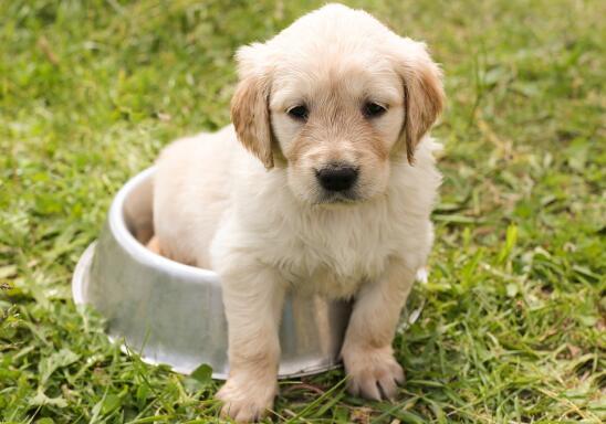 养狗十年成半个兽医,宠主家中需常备什么药