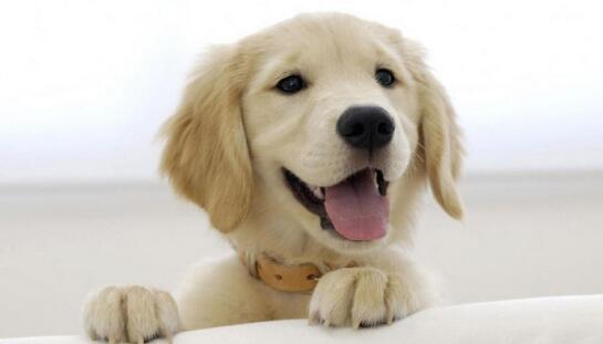 如何给狗狗剪指甲?给狗狗剪指甲需要注意这几点