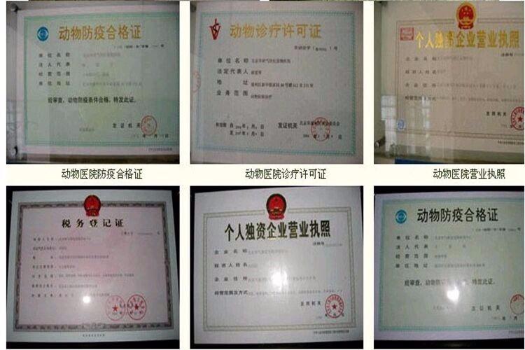 广州犬场直销纯种泰迪犬包品相包健康送泰迪犬狗粮等7