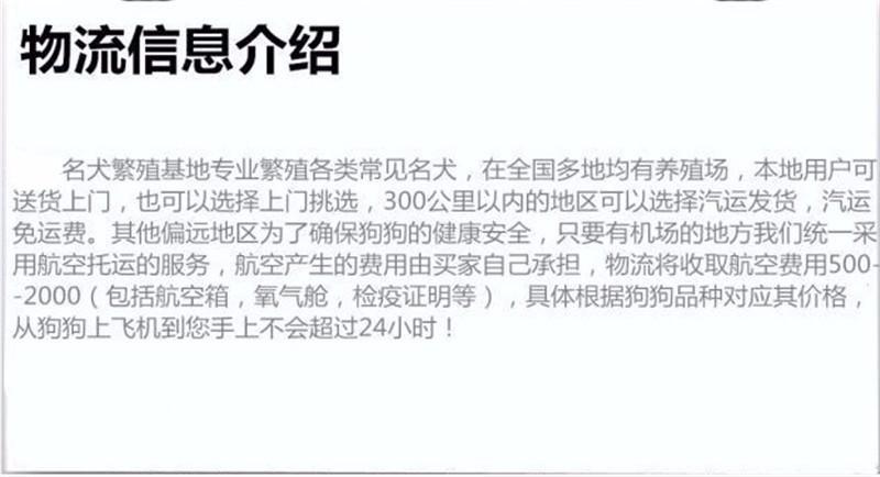 广州犬场直销纯种泰迪犬包品相包健康送泰迪犬狗粮等13