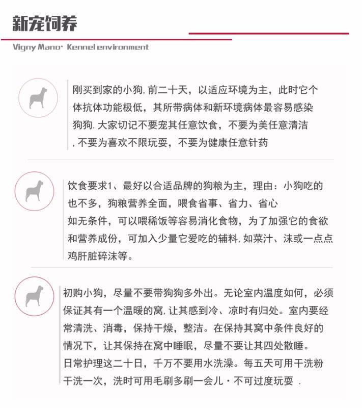 苏州热卖大丹犬多只挑选视频看狗支持全国空运发货9
