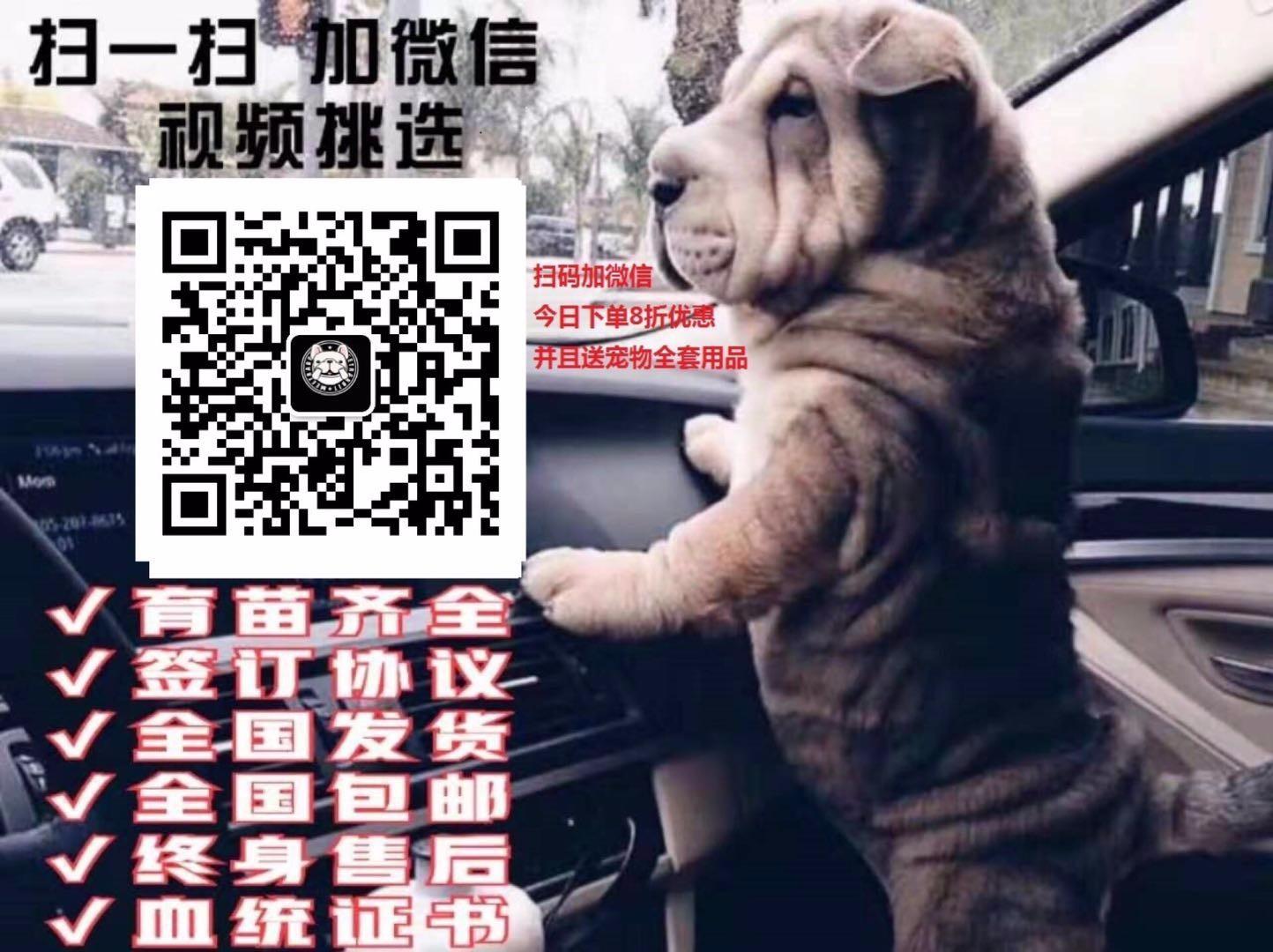 出售茶杯犬专业缔造完美品质签署质保合同5