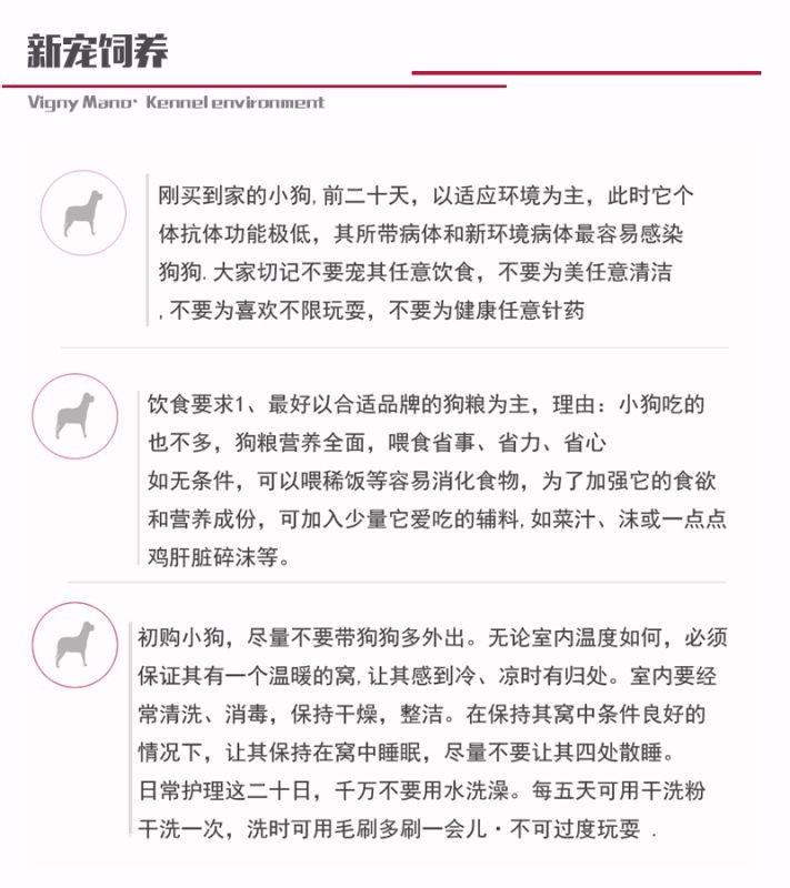 CKU犬舍认证出售高品质大丹犬提供护养指导9