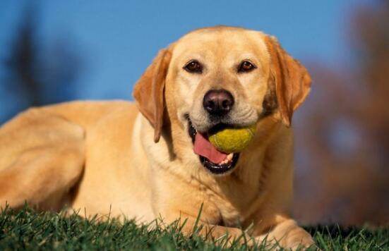 不用成犬狗粮喂幼犬、宠主们不要在犯错了