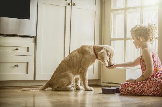 狗狗不听话 你的训练方法真的得当吗?