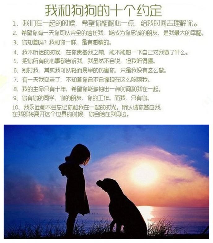 基地直销纯种泰迪幼犬 海口的朋友上门选购爱犬11
