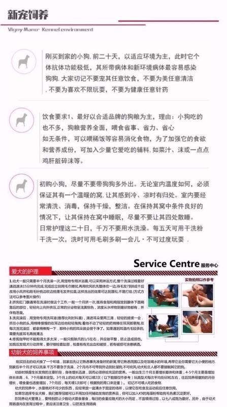 极品韩系血统小体沈阳泰迪犬热销 可签订售后协议书9