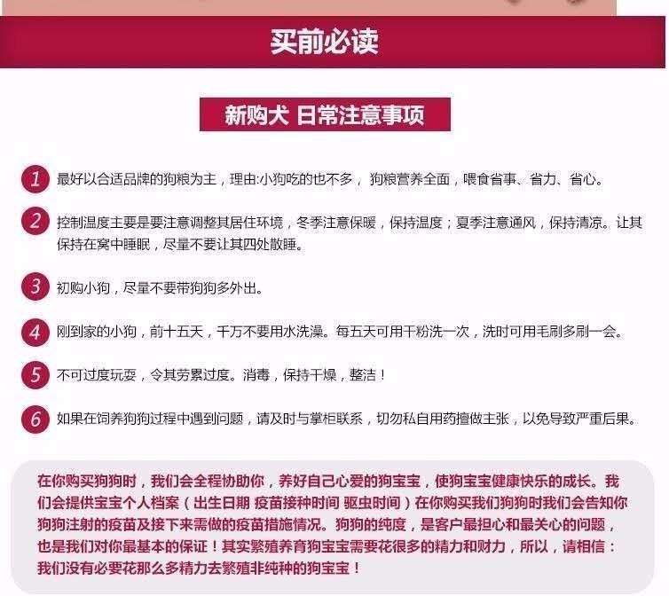 杭州自家狗场繁殖直销大丹犬幼犬真实照片视频挑选6